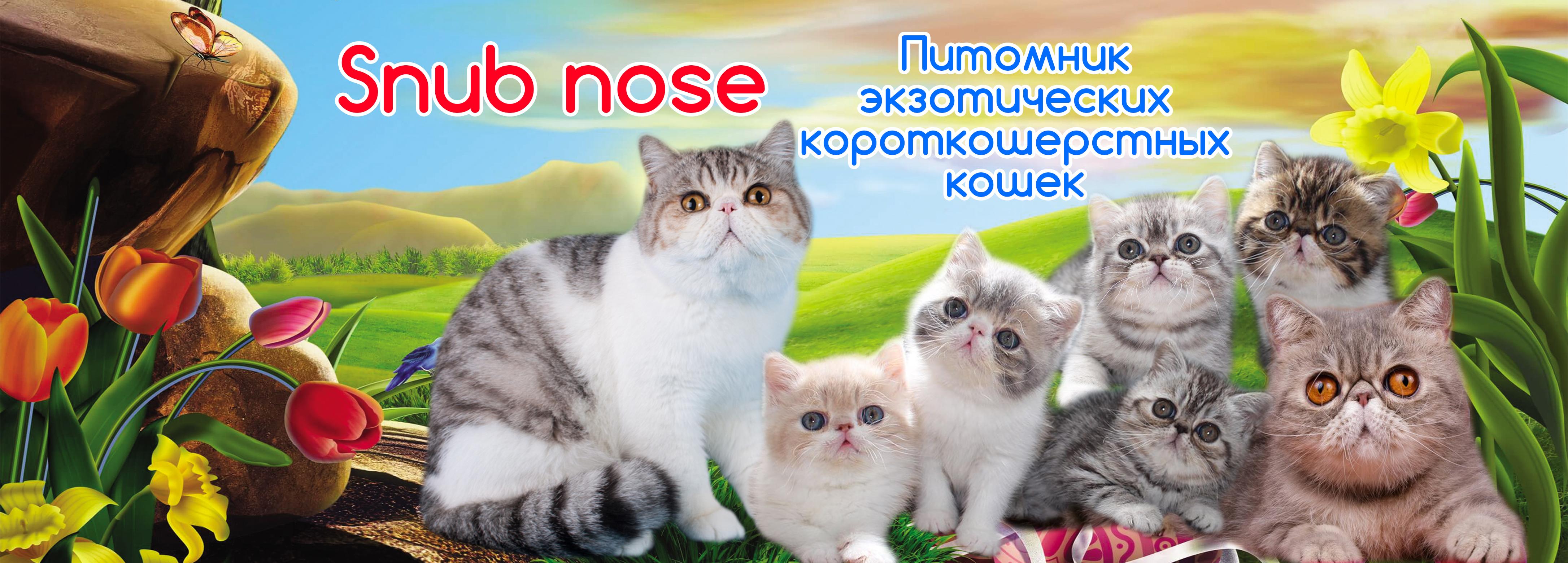 Snub nose
